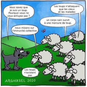 mouton loup