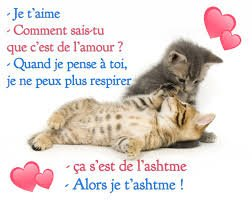 amour chat